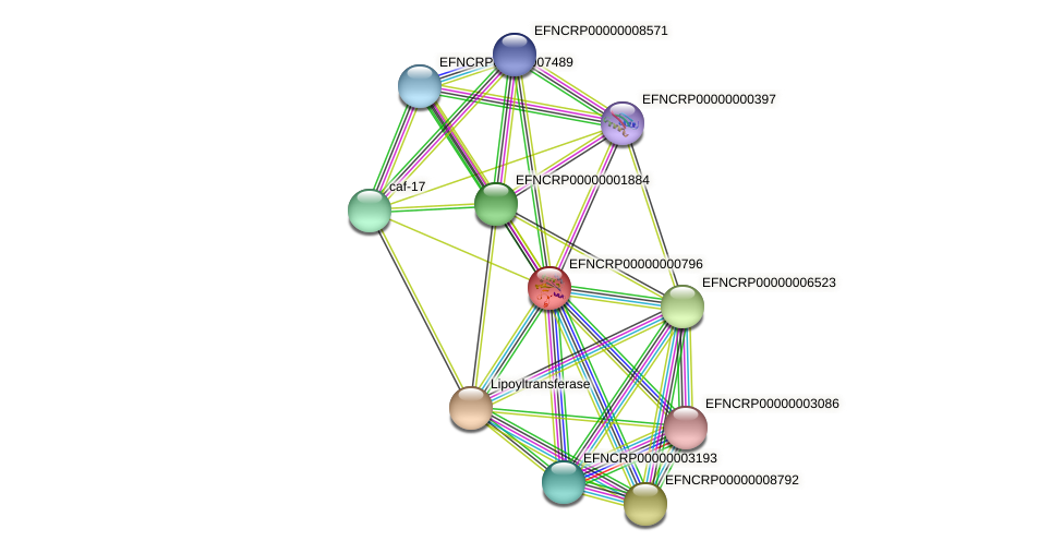 EFNCRP00000000796 protein (Neurospora crassa) - STRING interaction network