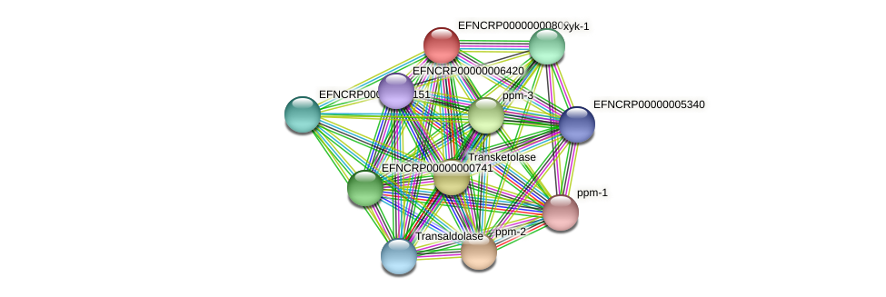 EFNCRP00000000800 protein (Neurospora crassa) - STRING interaction network