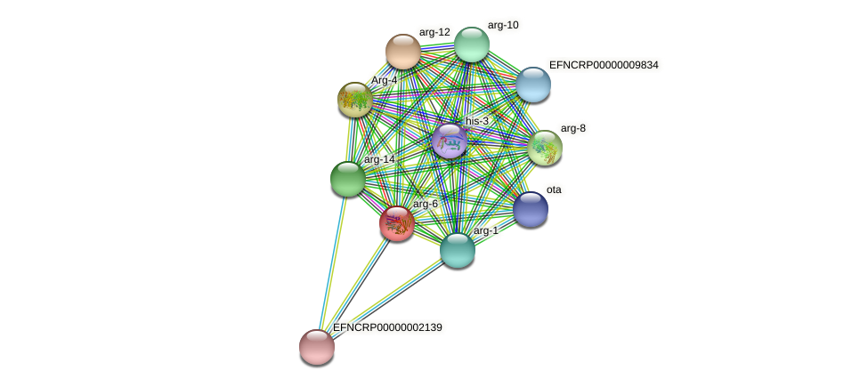 arg-6 protein (Neurospora crassa) - STRING interaction network