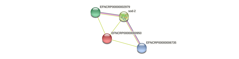 EFNCRP00000000950 protein (Neurospora crassa) - STRING interaction network