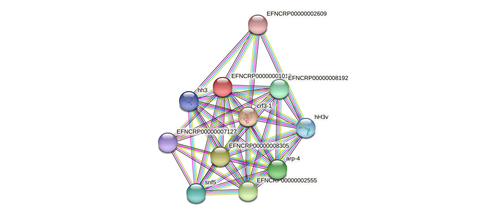EFNCRP00000001012 protein (Neurospora crassa) - STRING interaction network