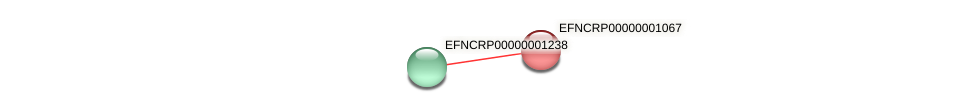 EFNCRP00000001067 protein (Neurospora crassa) - STRING interaction network
