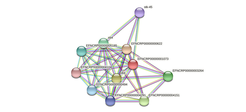 EFNCRP00000001073 protein (Neurospora crassa) - STRING interaction network