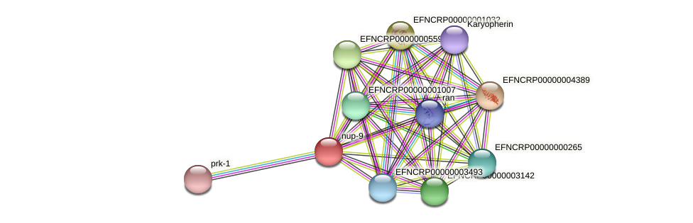 nup-9 protein (Neurospora crassa) - STRING interaction network