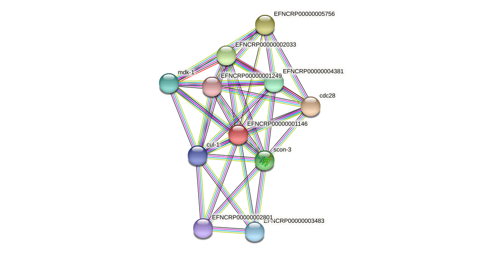 EFNCRP00000001146 protein (Neurospora crassa) - STRING interaction network