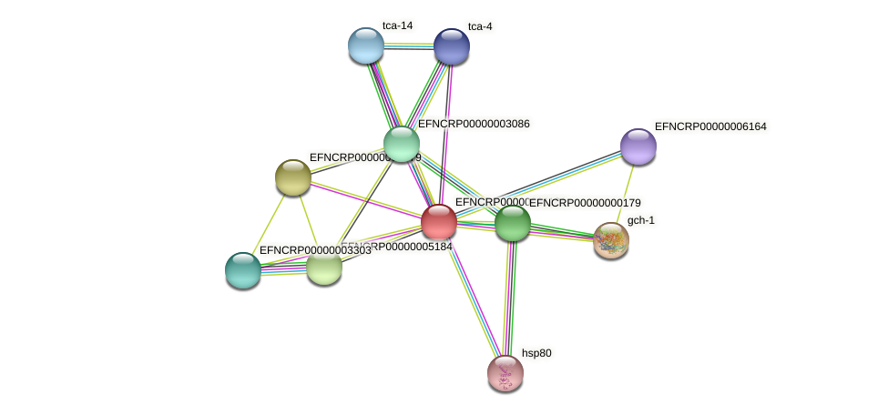 EFNCRP00000001181 protein (Neurospora crassa) - STRING interaction network