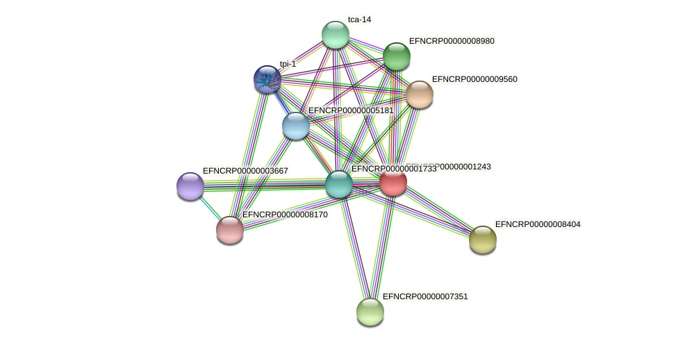 EFNCRP00000001243 protein (Neurospora crassa) - STRING interaction network