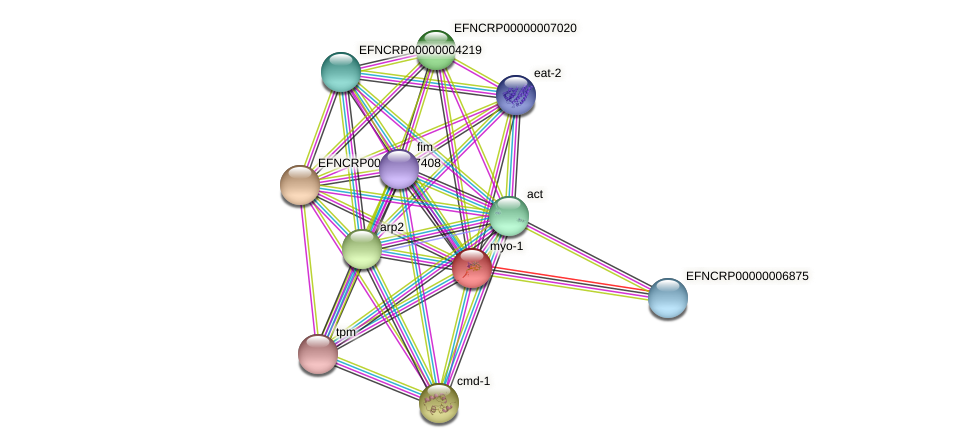 EFNCRP00000001310 protein (Neurospora crassa) - STRING interaction network
