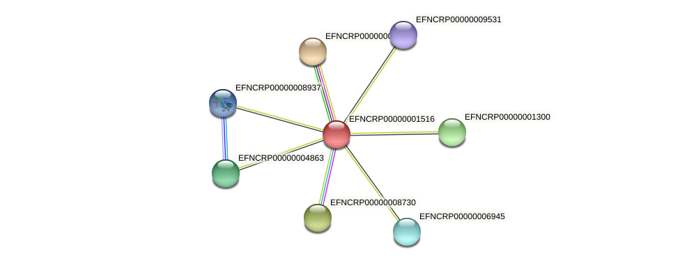 EFNCRP00000001516 protein (Neurospora crassa) - STRING interaction network