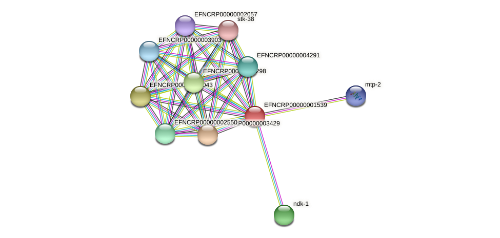 EFNCRP00000001539 protein (Neurospora crassa) - STRING interaction network