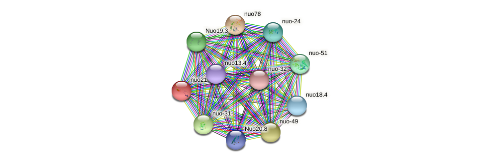 nuo21.3c protein (Neurospora crassa) - STRING interaction network