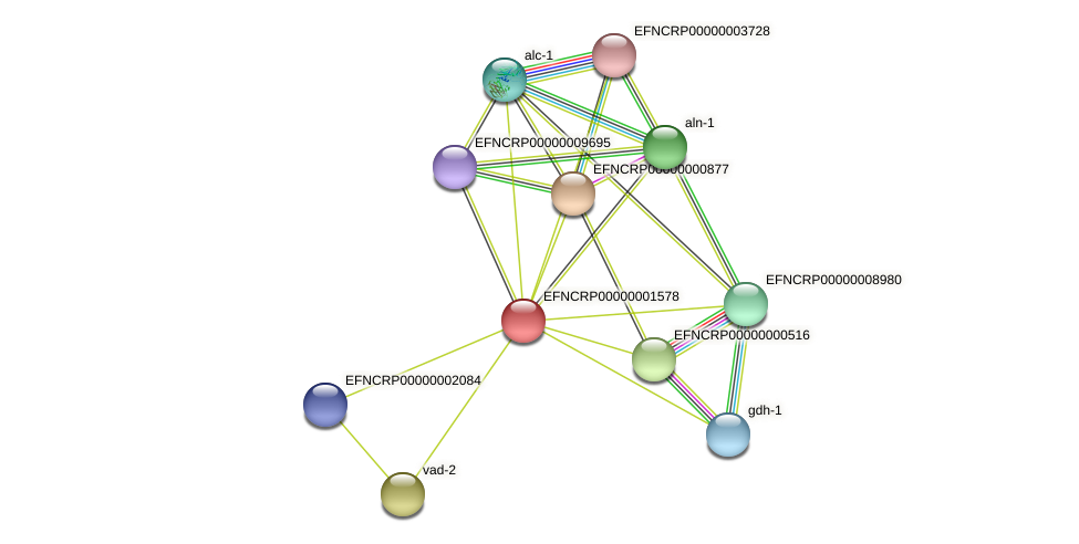 EFNCRP00000001578 protein (Neurospora crassa) - STRING interaction network
