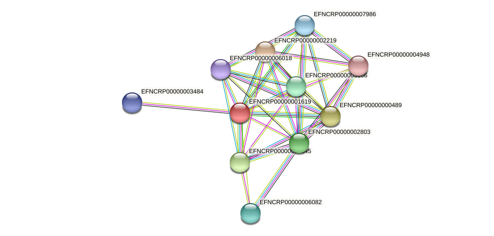 EFNCRP00000001619 protein (Neurospora crassa) - STRING interaction network