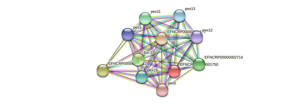 B17C10.260 protein (Neurospora crassa) - STRING interaction network