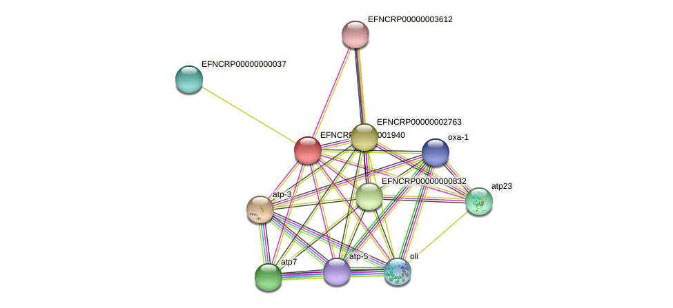 EFNCRP00000001940 protein (Neurospora crassa) - STRING interaction network