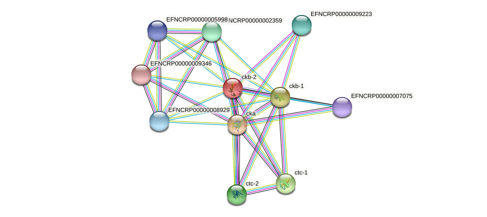 ckb-2 protein (Neurospora crassa) - STRING interaction network