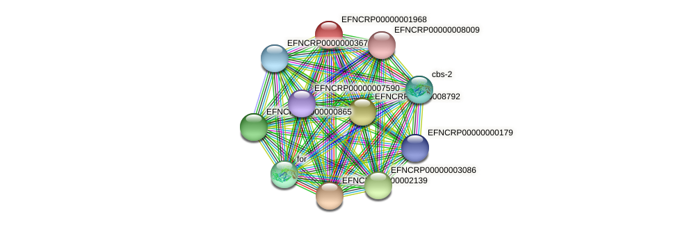 EFNCRP00000001968 protein (Neurospora crassa) - STRING interaction network