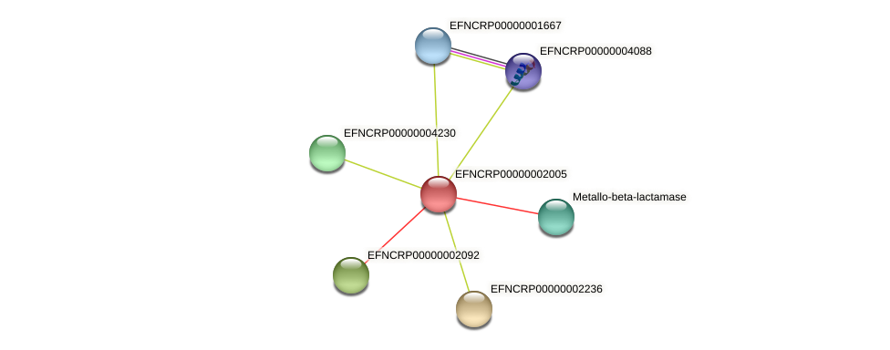 EFNCRP00000002005 protein (Neurospora crassa) - STRING interaction network