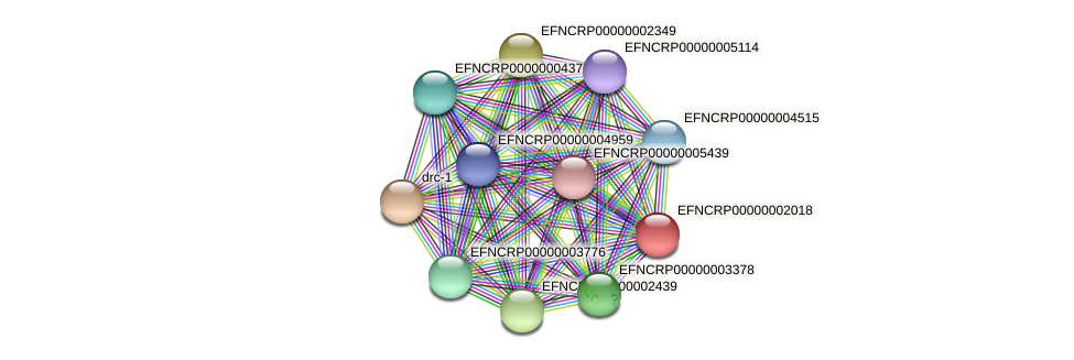 EFNCRP00000002018 protein (Neurospora crassa) - STRING interaction network