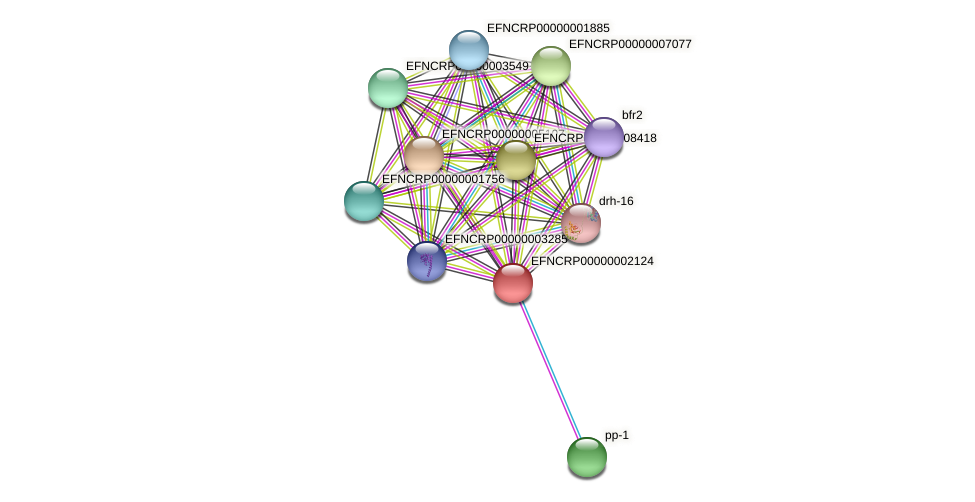 EFNCRP00000002124 protein (Neurospora crassa) - STRING interaction network