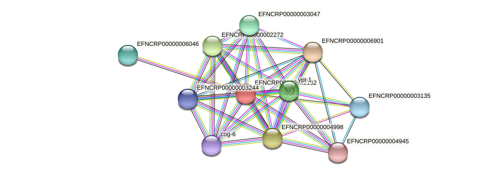 EFNCRP00000002132 protein (Neurospora crassa) - STRING interaction network