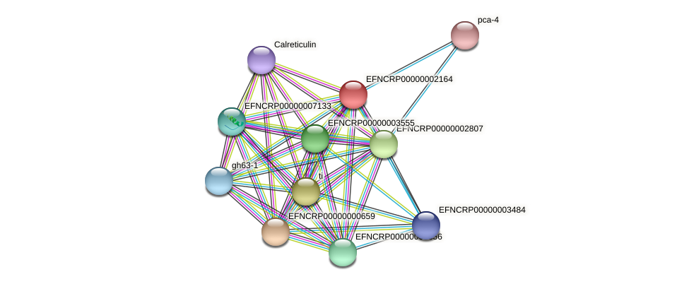 EFNCRP00000002164 protein (Neurospora crassa) - STRING interaction network