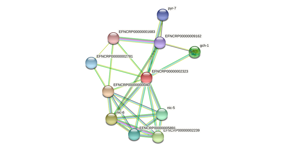 EFNCRP00000002323 protein (Neurospora crassa) - STRING interaction network