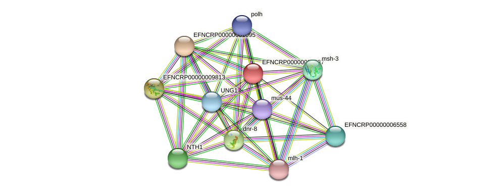 EFNCRP00000002337 protein (Neurospora crassa) - STRING interaction network