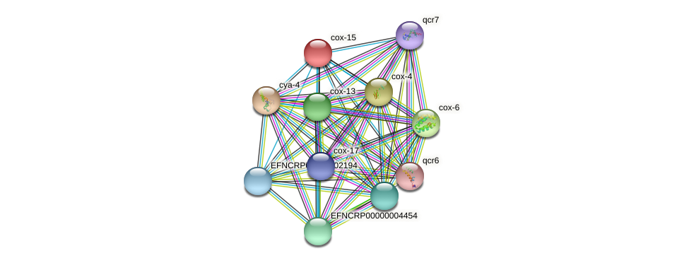 B10C3.140 protein (Neurospora crassa) - STRING interaction network