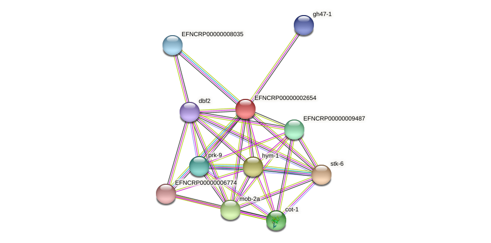 EFNCRP00000002654 protein (Neurospora crassa) - STRING interaction network