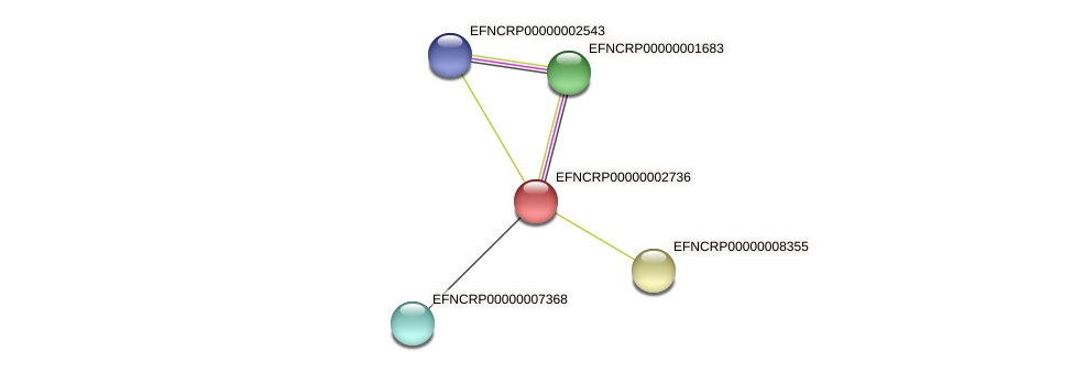 EFNCRP00000002736 protein (Neurospora crassa) - STRING interaction network