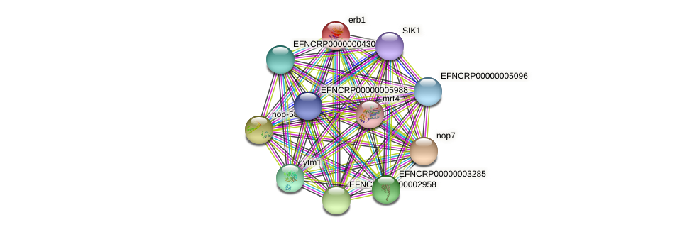 erb-1 protein (Neurospora crassa) - STRING interaction network