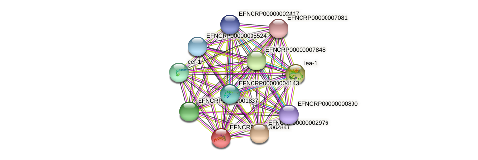 EFNCRP00000002841 protein (Neurospora crassa) - STRING interaction network