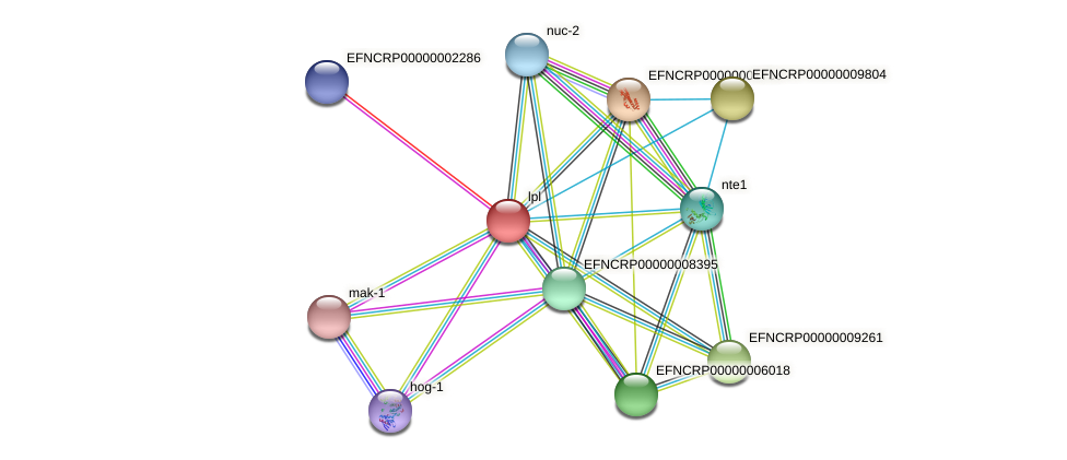 lpl protein (Neurospora crassa) - STRING interaction network