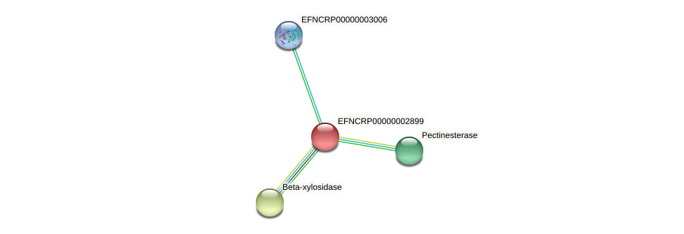 EFNCRP00000002899 protein (Neurospora crassa) - STRING interaction network