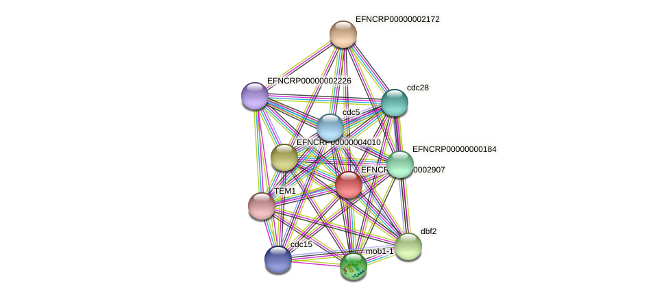 EFNCRP00000002907 protein (Neurospora crassa) - STRING interaction network