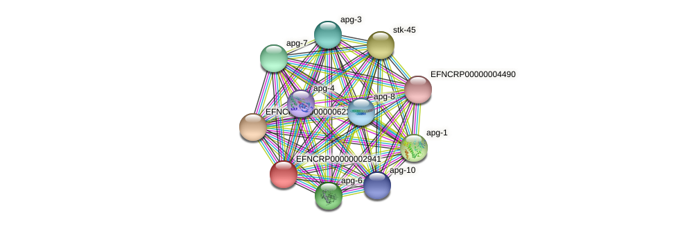 EFNCRP00000002941 protein (Neurospora crassa) - STRING interaction network