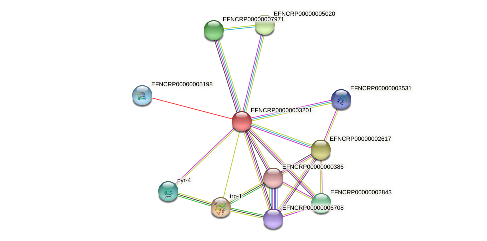 EFNCRP00000003201 protein (Neurospora crassa) - STRING interaction network