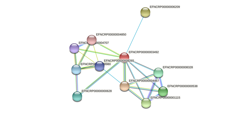EFNCRP00000003492 protein (Neurospora crassa) - STRING interaction network