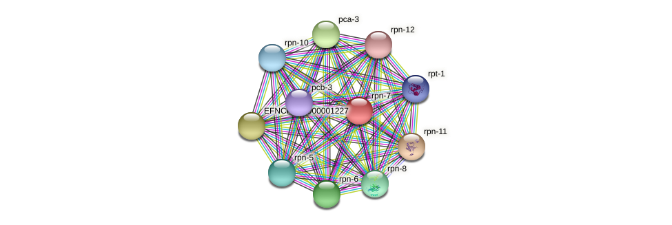 rpn-7 protein (Neurospora crassa) - STRING interaction network