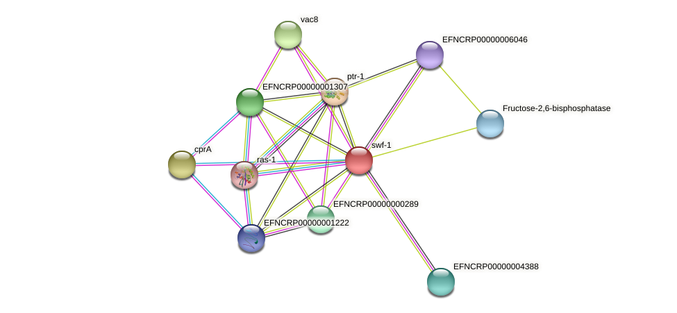 EFNCRP00000003596 protein (Neurospora crassa) - STRING interaction network