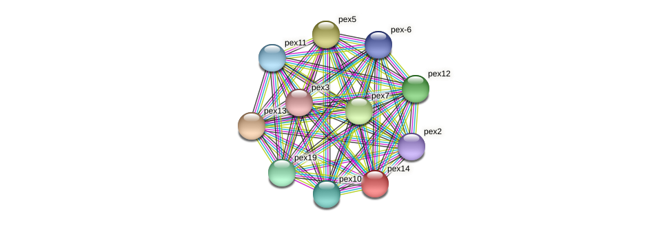 B23L21.090 protein (Neurospora crassa) - STRING interaction network