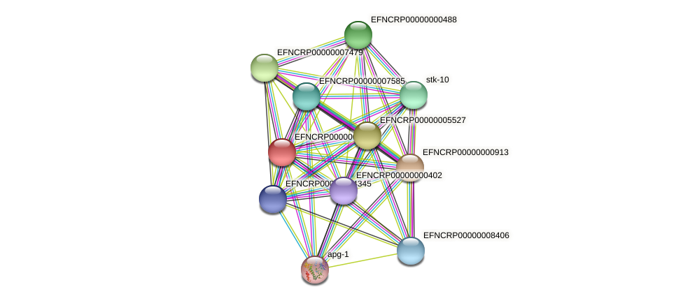 EFNCRP00000003800 protein (Neurospora crassa) - STRING interaction network