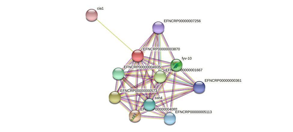 EFNCRP00000003870 protein (Neurospora crassa) - STRING interaction network