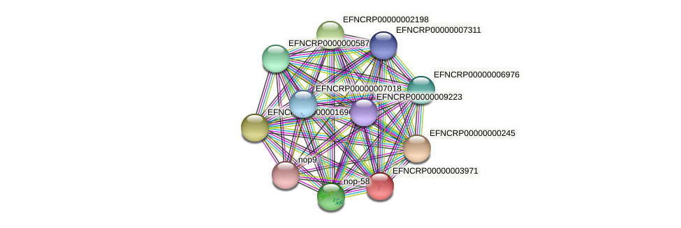 EFNCRP00000003971 protein (Neurospora crassa) - STRING interaction network