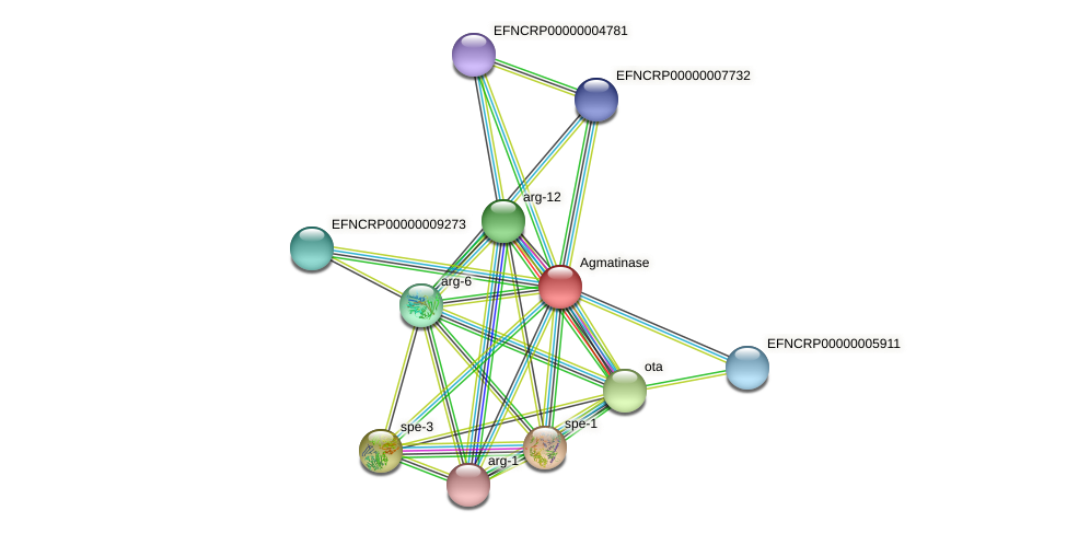 B13A5.050 protein (Neurospora crassa) - STRING interaction network