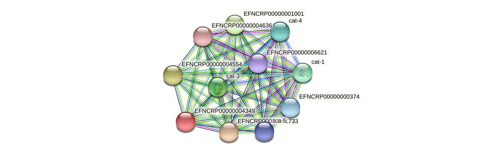 EFNCRP00000004349 protein (Neurospora crassa) - STRING interaction network