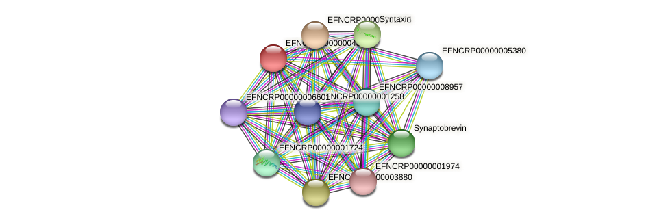 EFNCRP00000004388 protein (Neurospora crassa) - STRING interaction network