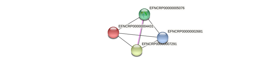 EFNCRP00000004431 protein (Neurospora crassa) - STRING interaction network