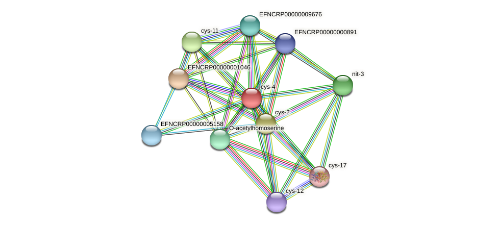 cys-4 protein (Neurospora crassa) - STRING interaction network